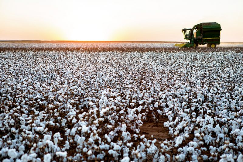 Organic cotton fields, Texas, Photo: Tim Davis